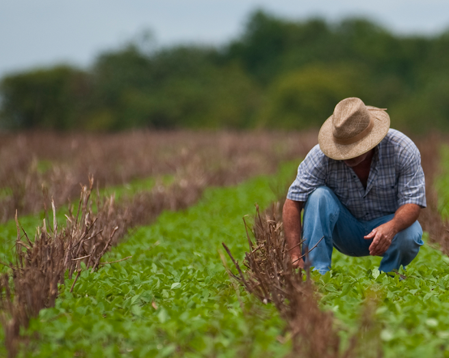 Curso de tecnico agricola
